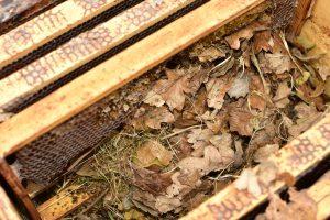 2 kleine Spitzmäuse haben sich ein Nest gebaut.